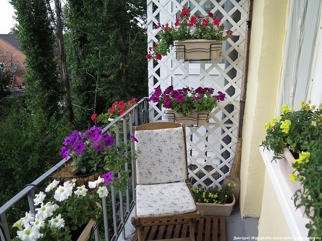 Балкон 2015 персональный сайт дмитрия журавлева.
