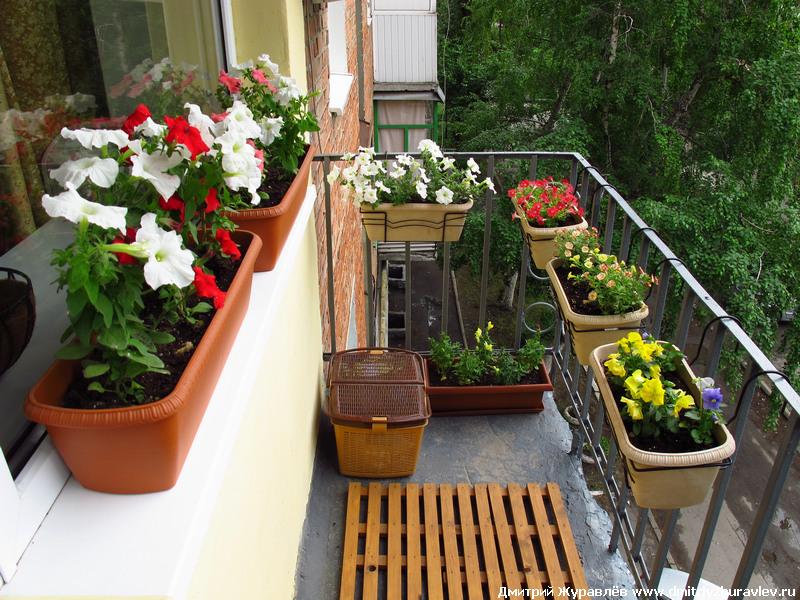 Ящики под цветы на балкон купить живые цветы на трехсвятской